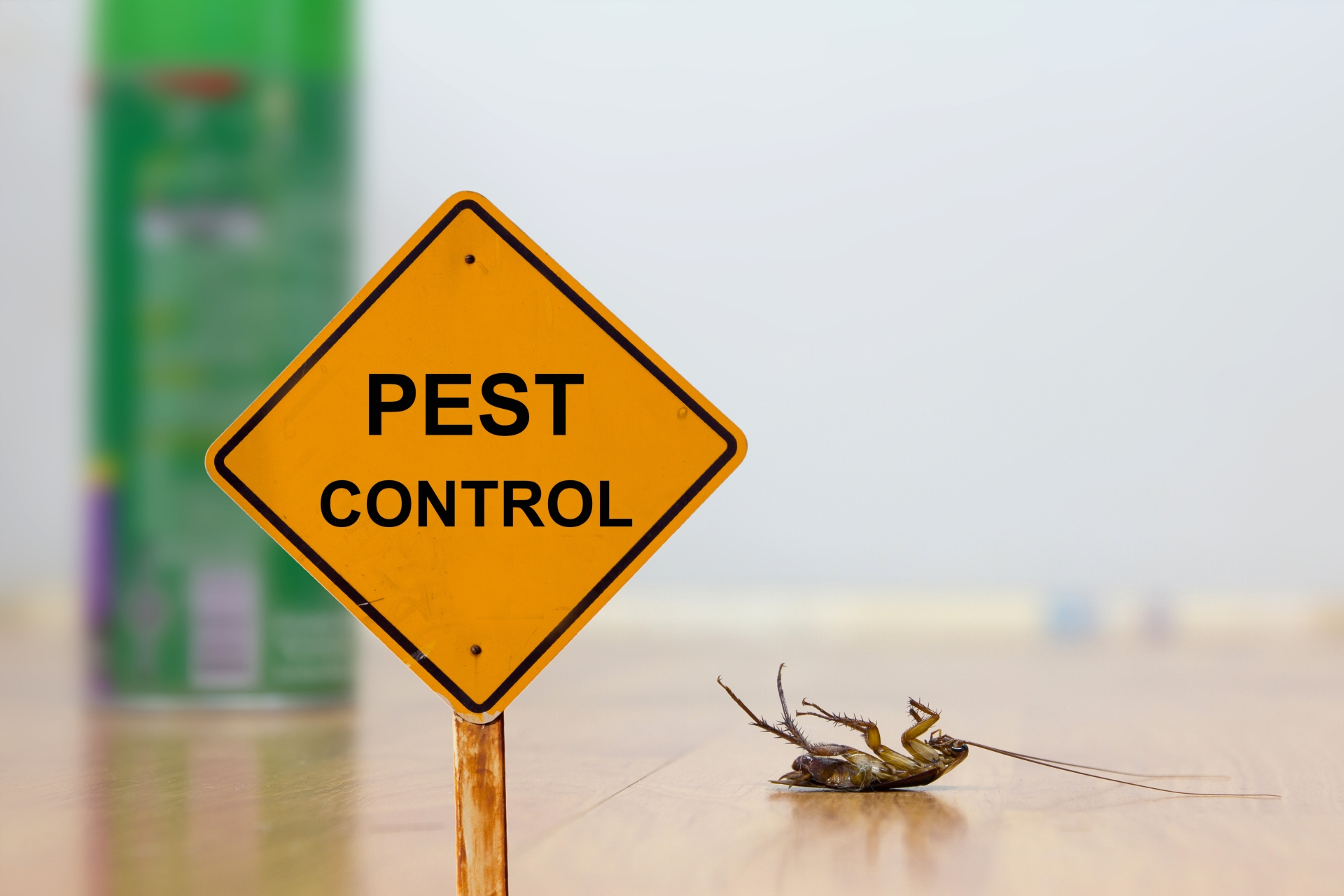 24 Hour Pest Control, Pest Control in Holloway, N7 . Call Now 020 8166 9746