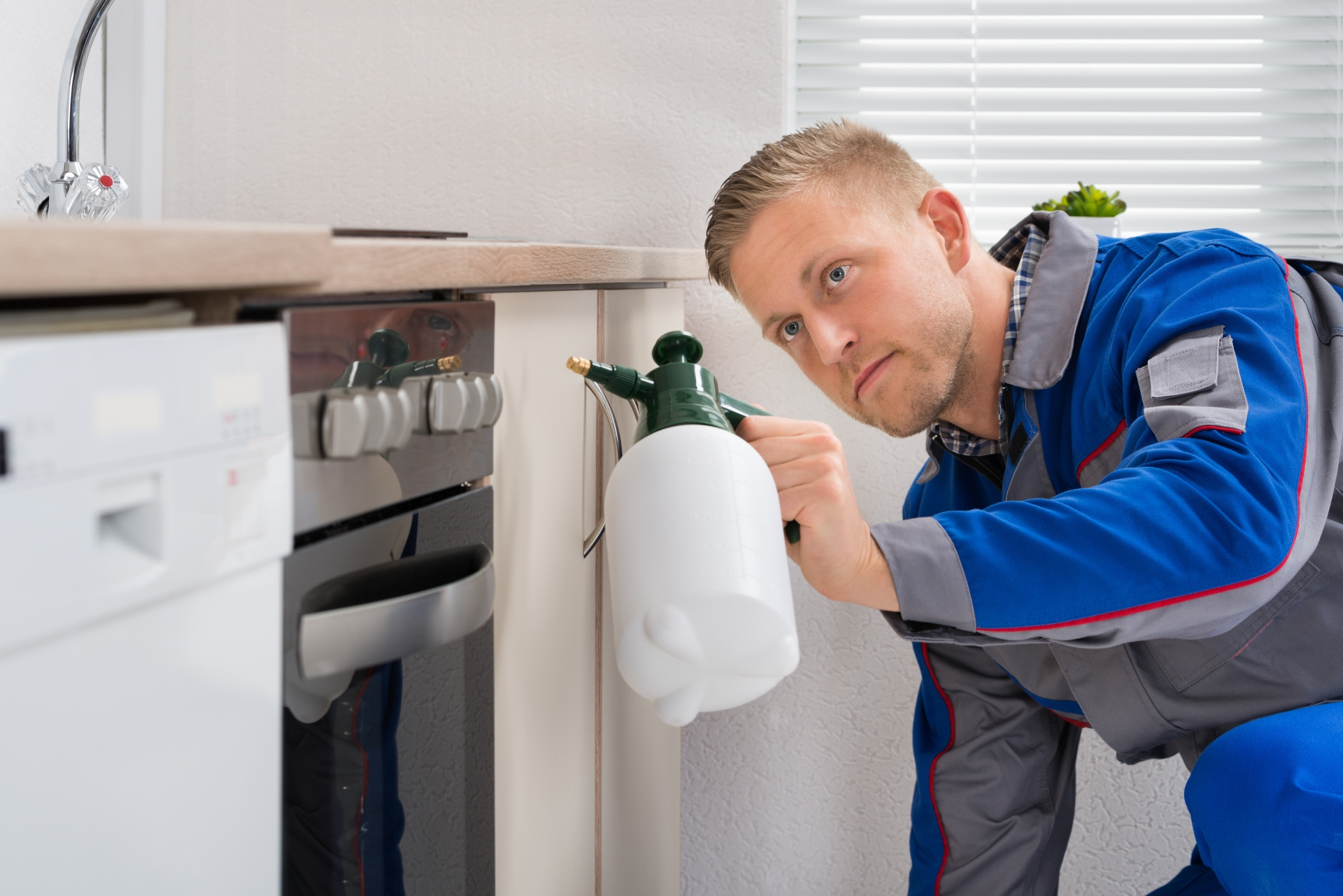 Pest Inspection, Pest Control in Holloway, N7 . Call Now 020 8166 9746